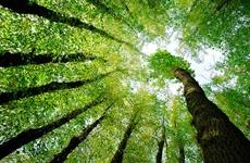 陕西将通过45项举措促使生态环境质量总体改善
