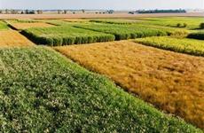 到2025年西安粮食生产面积稳定在400万亩左右