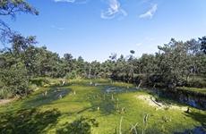 秦岭国家植物园发现 中国最北端野生蕙兰种群