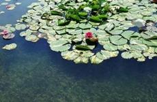陕西对已发现的26处城市黑臭水体年底将完成治理