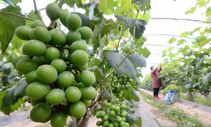 河北:立夏时节农事忙
