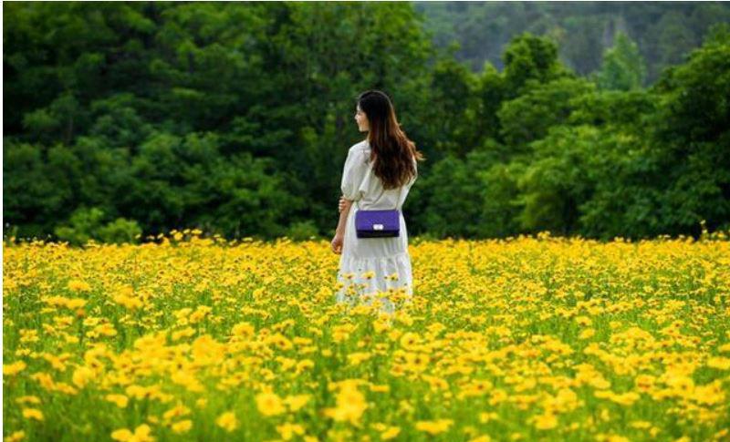 花开满地黄金甲 粉蝶飞舞在花间