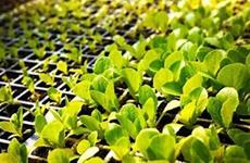陕西整顿林草种苗交易市场 对博览会交易会等加强监管