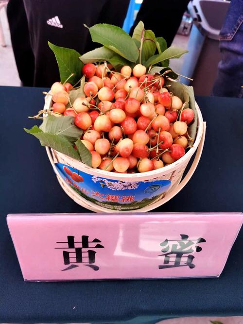"""绿水青山红樱桃 看乡村经济振兴的""""义马样本"""""""