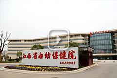 江西省妇幼保健院九龙湖院区开业