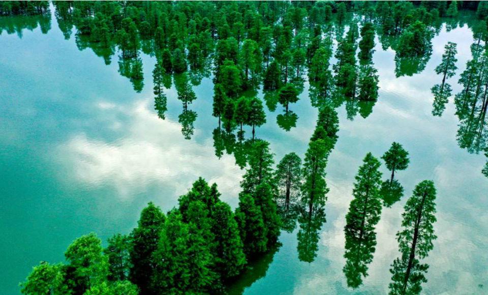 安徽庐江:水上森林 鸟儿天堂
