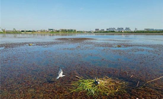 """镇赉环城湿地公园成""""鸟的天堂"""" """" width="""