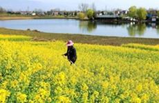 南郑、勉县两县区获得国家级制种大县奖励6000万元