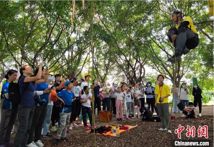 市民在广州海珠国家湿地公园体验攀树 姬东 摄