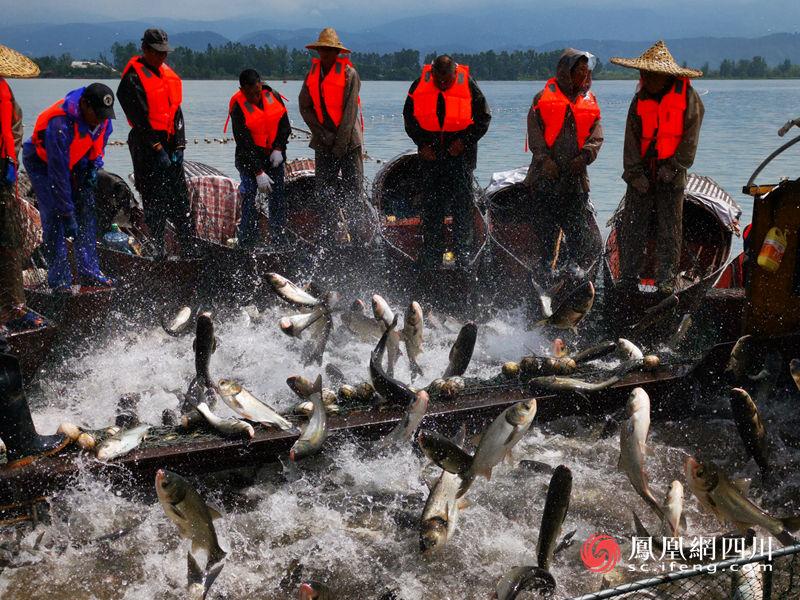 邛海渔民捕鱼