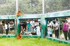 秦嶺野生動物園單日接待游客近2萬人次 創今年暑期最高紀錄