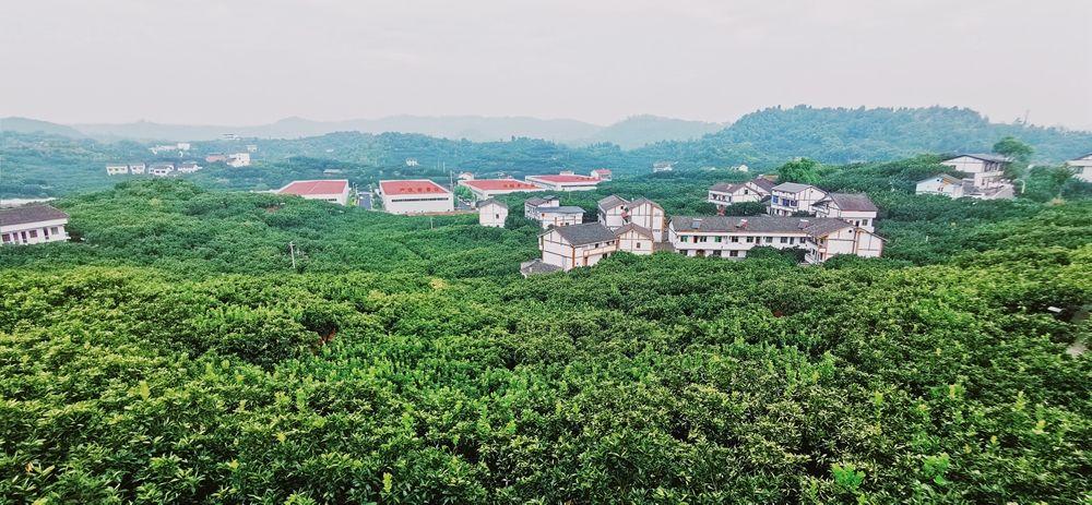 龙安柚现代农业园区
