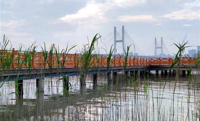 漢口江灘觀蘆花棧道重開放