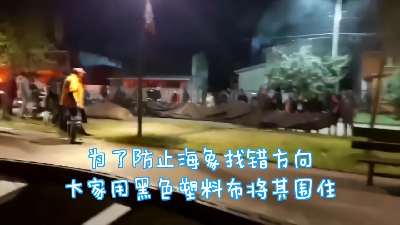 巨大海象扭过10个街区 宁静小镇上演深夜大营救