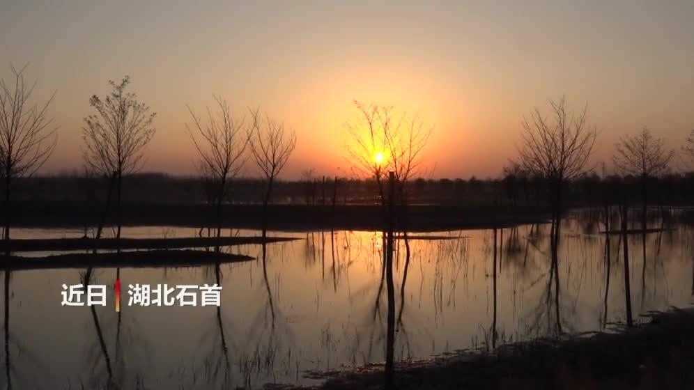 """在""""中国麋鹿之乡""""看夕阳下的野生麋鹿"""