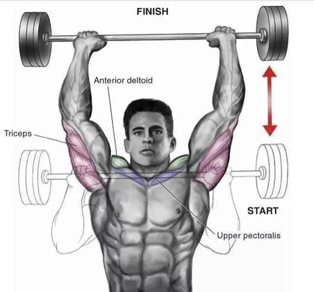 肩部、腿部训练动作大全,让你从此练得彻底!