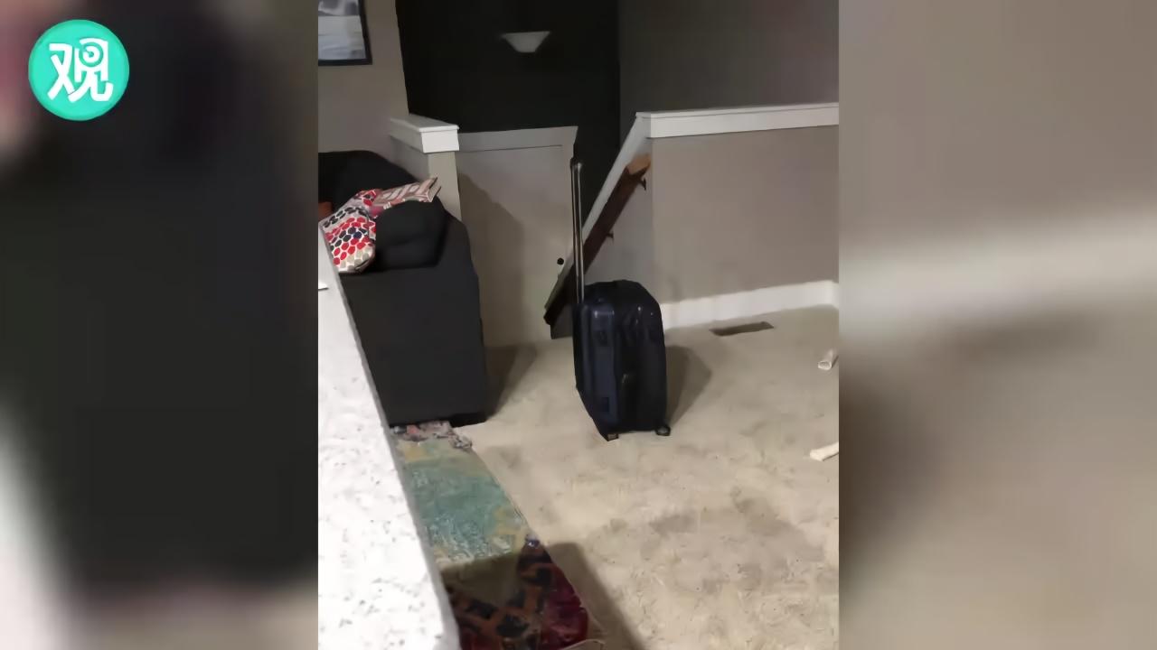 当狗狗看到主人拿出旅行箱……
