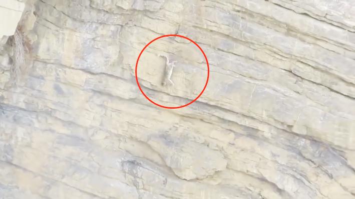 鳄鱼在水里悠哉的游,不料遭到花豹袭击,镜头拍下全过程图片