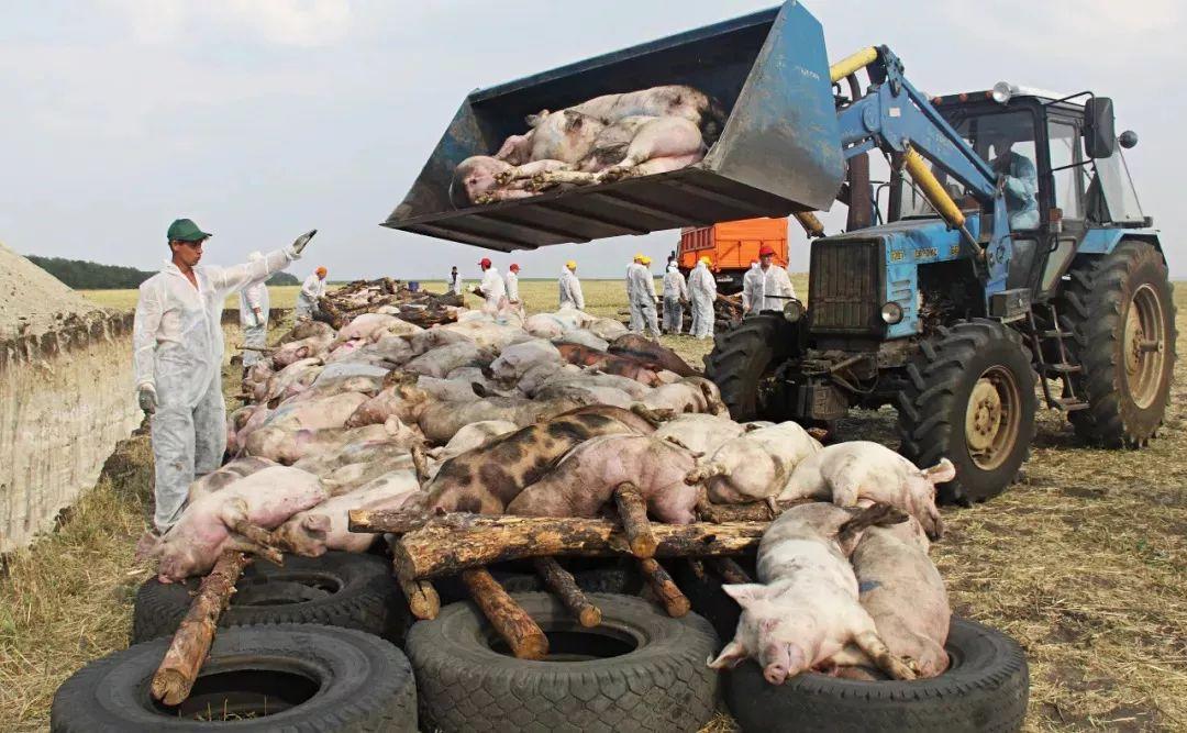 猪肉价格为何大涨?从一个村子观察全局