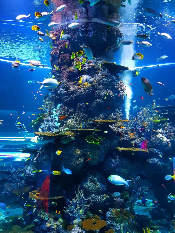全球资讯_当全球珊瑚都遭受没顶之灾时 这里却结出片繁茂的珊瑚海_凤凰网 ...