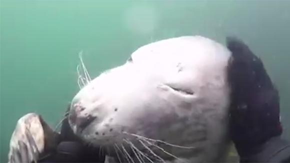 海豹被绳子缠住脖子无法呼吸,它痛苦的表情令人心疼和图片