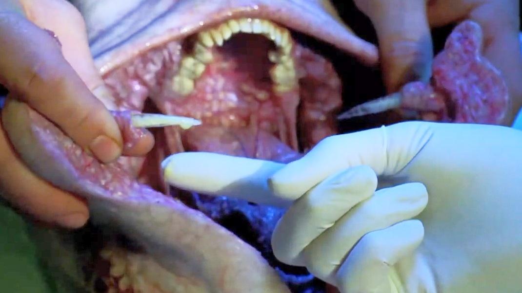 美女研究怪物的尸体,不料嘴里还有大毒刺,专门用来麻醉受害者
