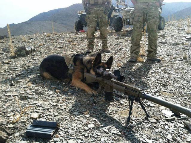 """美版""""88式霰弹狙"""",做工没有问题,为何不受美军待见?"""
