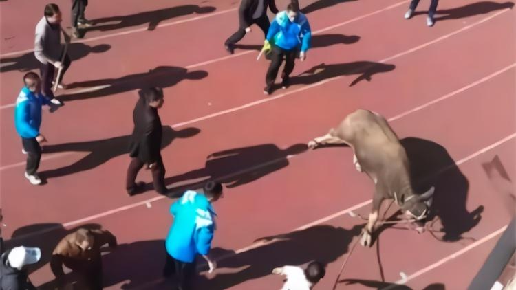 梅州校运会突然冲入大水牛 现场老师和学生都懵了