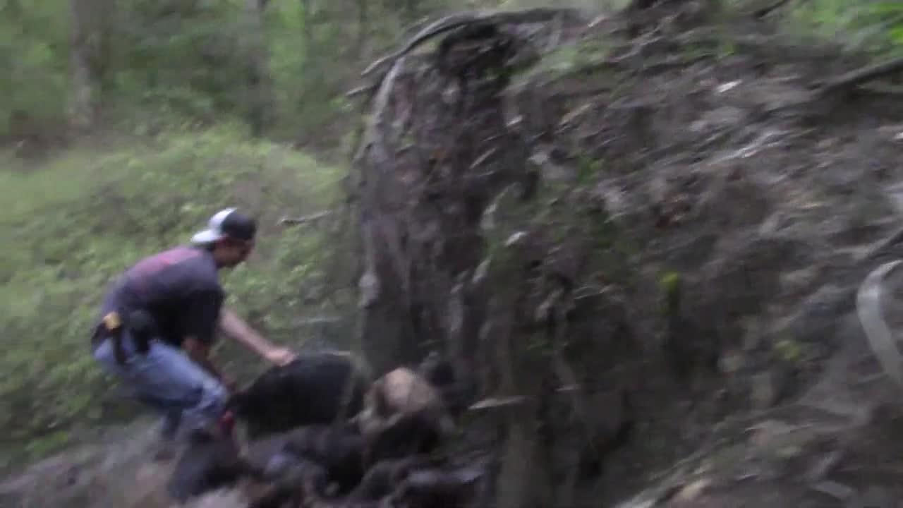 澳洲猎狗,装备齐全!围捕野猪之后,主人跟踪信号猎杀野猪