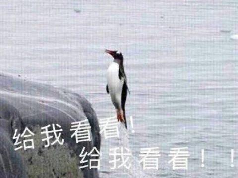 林志玲做试管婴儿 45岁林志玲终于怀孕:冻卵、做试管婴儿,我的子宫我做主