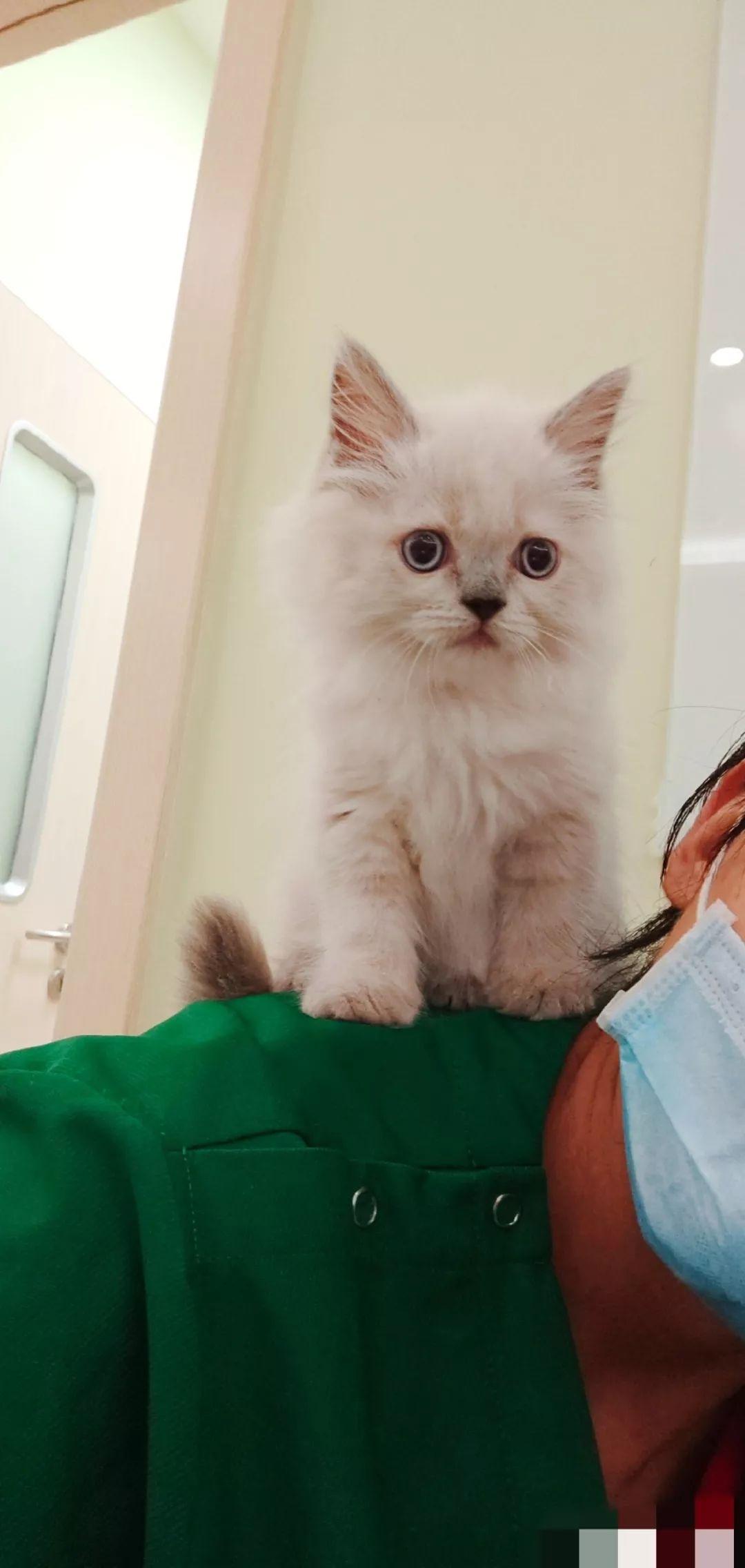 我的患者不会说话,还偶然在诊室里随意大小便
