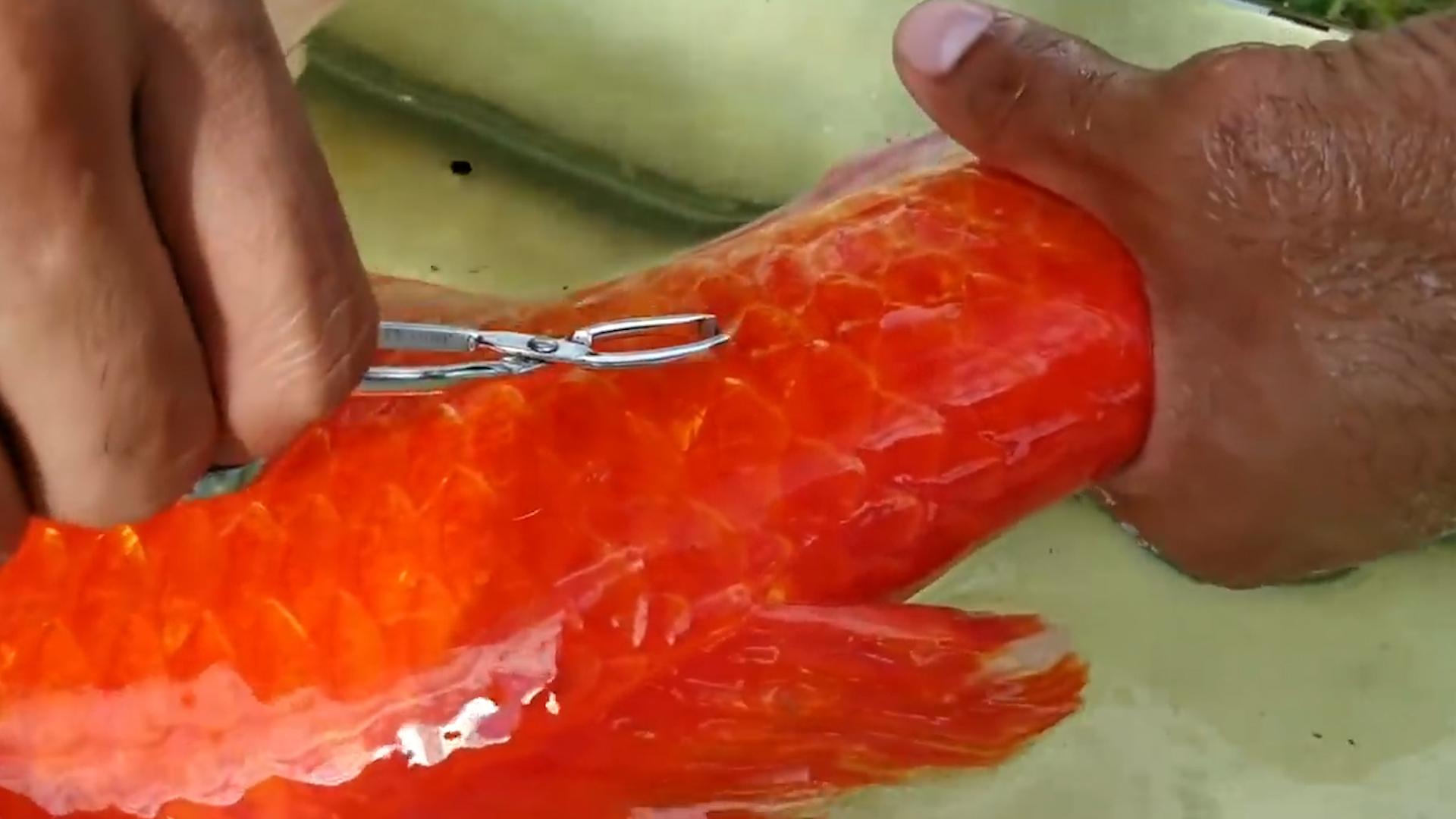 大红鲤鱼剪纸步骤图解