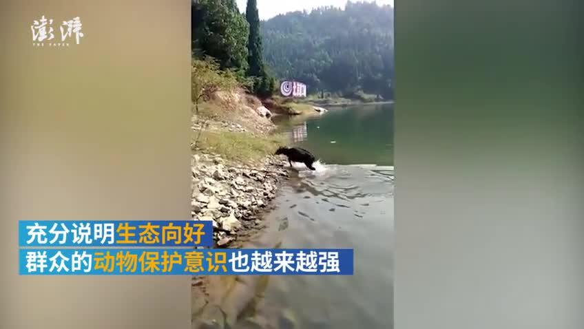 """千岛湖休闲垂钓,男子解救被困""""四不像"""""""