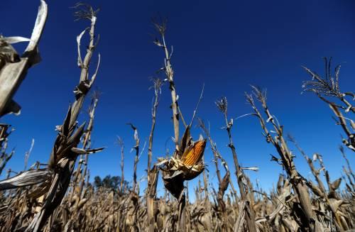 日本承诺购买美国玉米,真实目的
