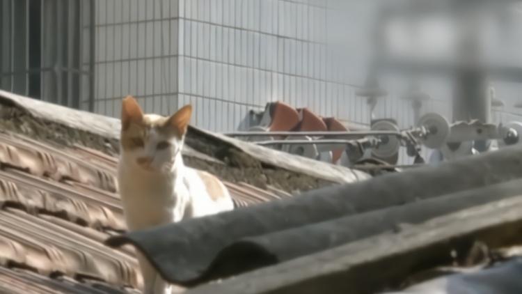 水有问题?流浪猫相继死亡,南宁一小区居民怀疑遭人投毒