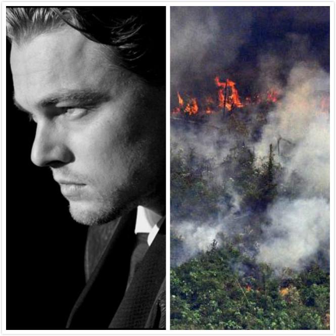 小李子所創基金會承諾為亞馬孫森林大火捐款500萬美元