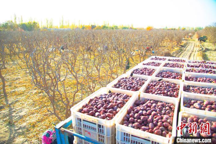 新疆林果业岳普湖样本助力精准脱贫