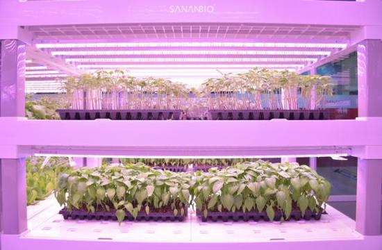 植物工厂实现精准育苗
