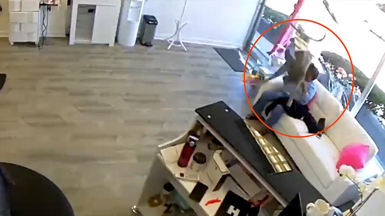 """理发店内闯进一头鹿 撞碎玻璃还""""顺走""""电夹板"""