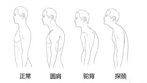 滚动 正文  1,双手握住哑铃身体前倾 2,水平两侧平举,感受肩部后侧