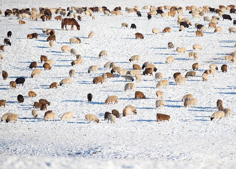 【百度网站优化】_送中国三万只羊,这位前摔跤世界冠军是如何治理蒙古的?