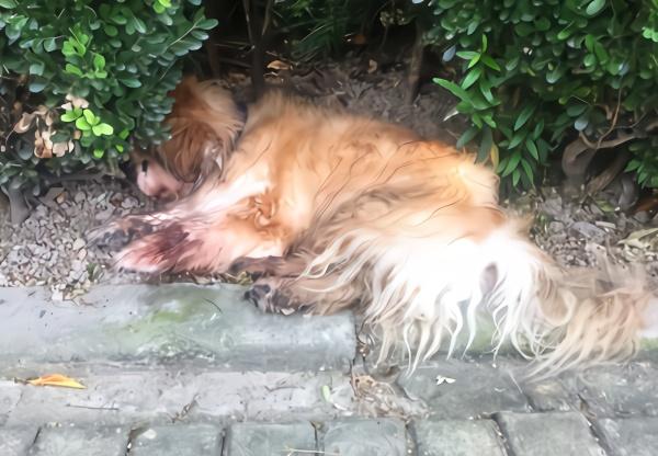 被遗弃的老年犬只。浦东警方供图