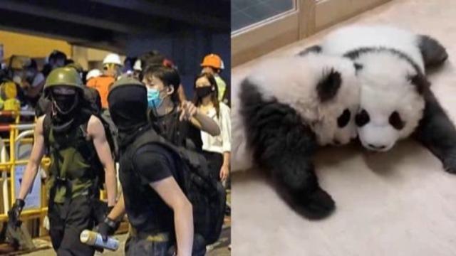 """""""港独""""黑手伸向大熊猫宝宝 这座动物园严词拒绝"""