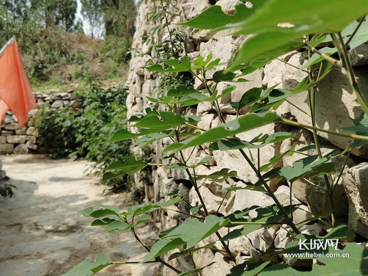 邯郸市峰峰矿区大峪镇:石头窑洞里的乡愁