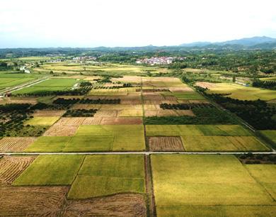 南丰:高标准农田喜获丰收