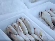 美高梅官网平台斗门:一条海鲈鱼 游出致富路