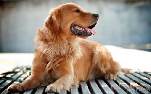 为什么要给狗狗驱虫,驱虫要多久一次?