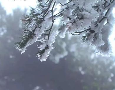 美翻了!九江庐山迎来今冬首场雾凇