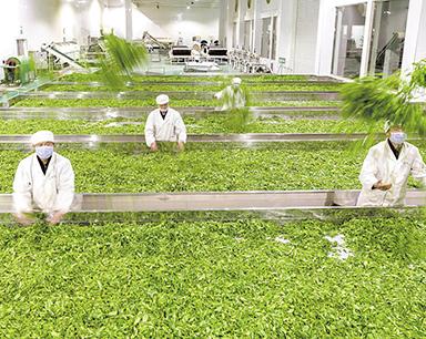 湖北如何摆脱农业产业化发展的诸多窘境