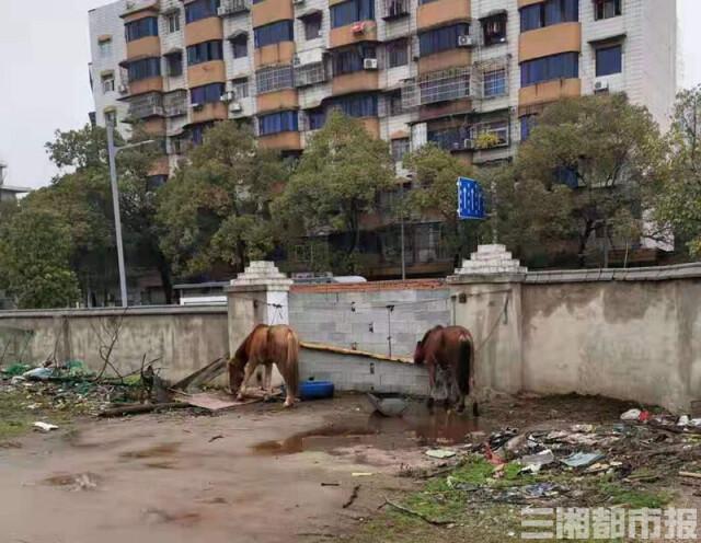 養在某農莊的馬匹